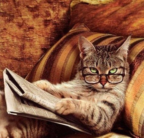 Gatto con gli occhiali che legge il giornale