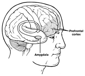 Cervello amigdala resilienza