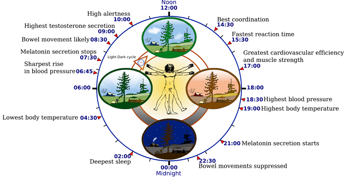 I cicli circadiani