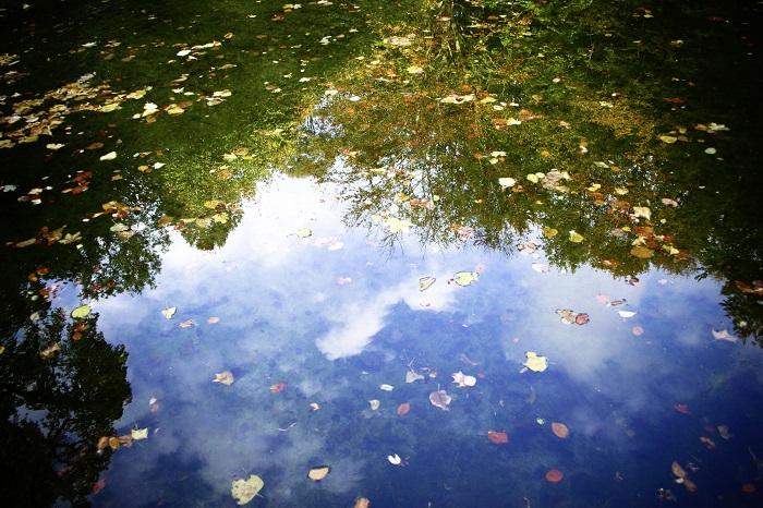 Mindfulness. Riflessi su un lago
